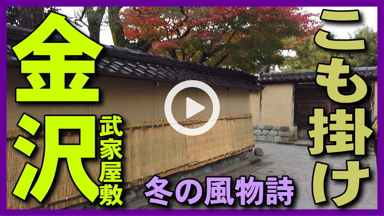 【こも掛け】長町武家屋敷跡の土塀に吊るす「こも掛け」作業。雪吊りと共に金沢の冬の風物詩。