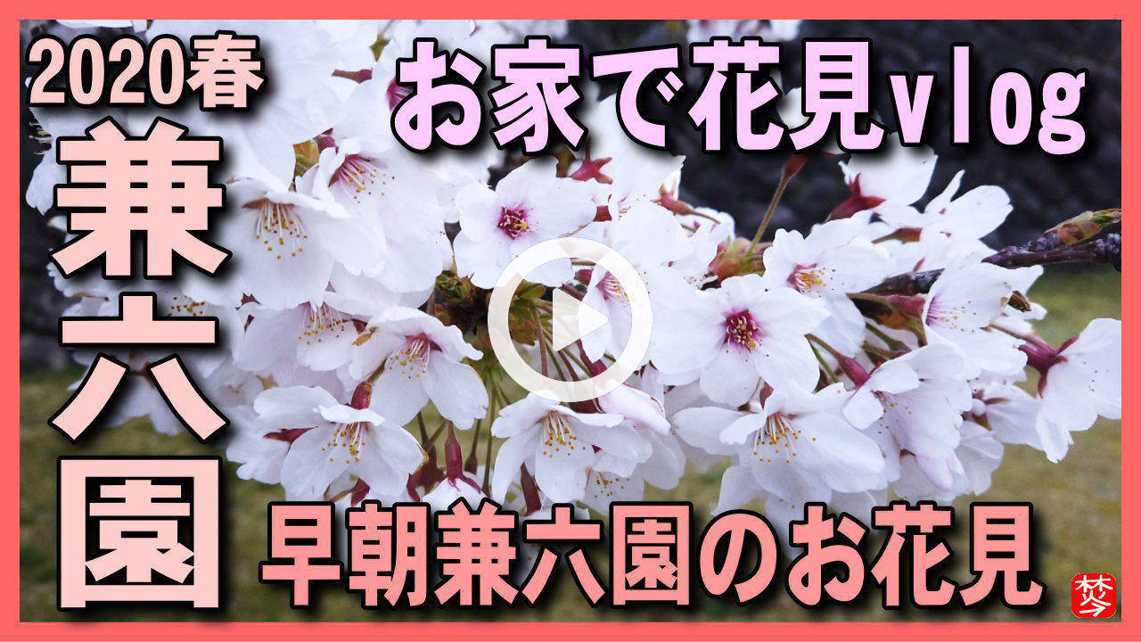 【3密を避けた満開兼六園vlog】新型コロナ緊急事態宣言で出歩けない方向け,兼六園・金沢城公園の満開桜をお家でvlogお花見