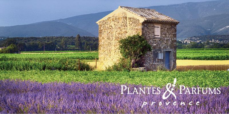PLANTES & PARFUMS(プランツ&パルファム)PLANTES & PARFUMS(プランツ&パルファム)プロヴァンス