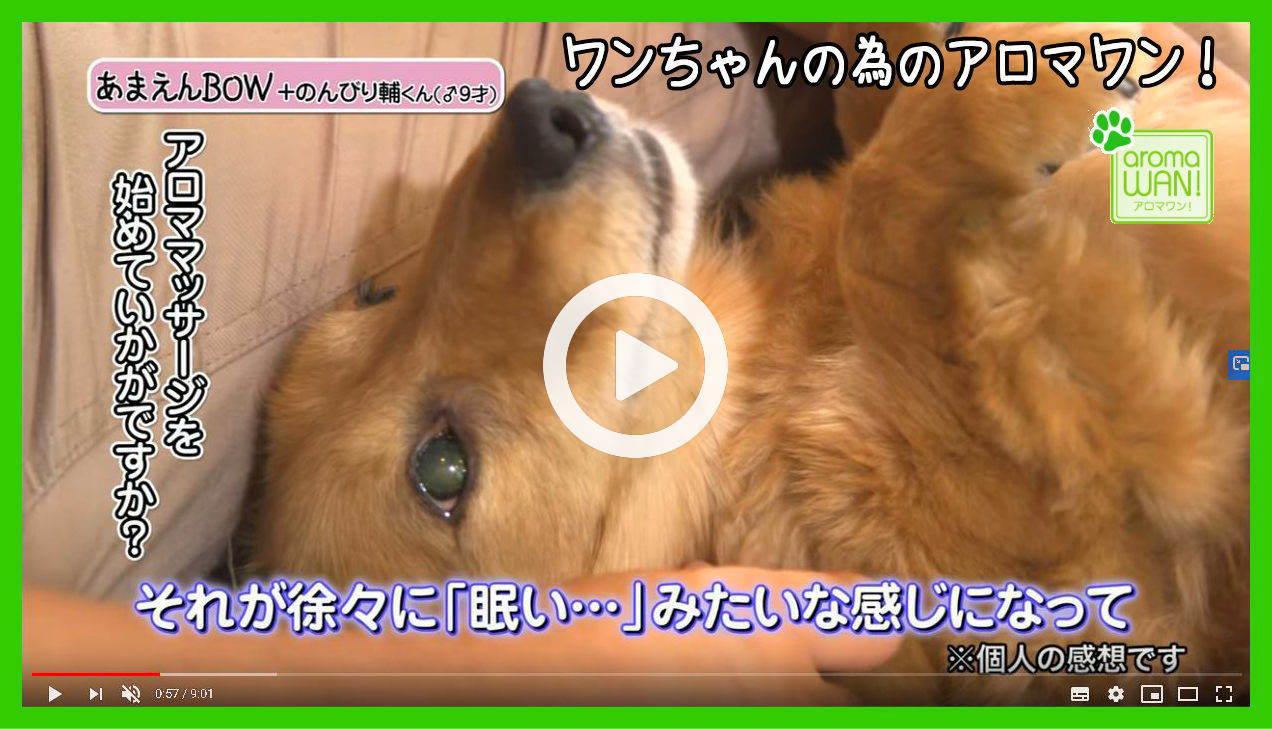 アロマワン 犬用アロマ