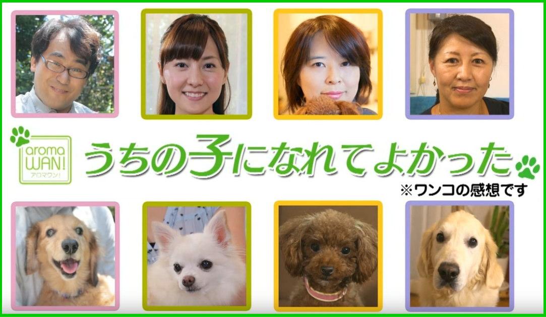 アロマワン ペット 犬用アロマ